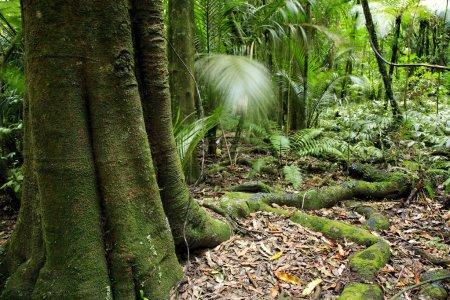 Photo pour Jungle de forêt tropicale de Nouvelle-Zélande - image libre de droit
