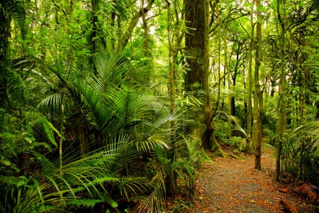 Photo for Walking trail in New Zealand tropical forest - Royalty Free Image