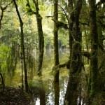 Trees on shoreline of swamp...