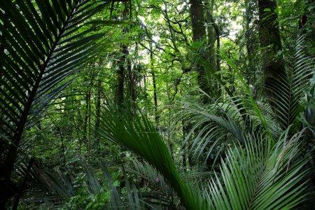 Photo pour Jungle de forêt tropicale, fond naturel - image libre de droit