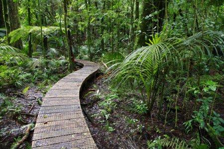 Photo pour Sentier pédestre dans la forêt tropicale de Nouvelle-Zélande - image libre de droit