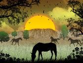 Divocí koně na sunset