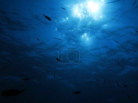 Photo pour Rayons de soleil de mer sous l'eau. - image libre de droit