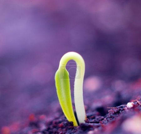 Photo for Growing little plant of macro - Royalty Free Image