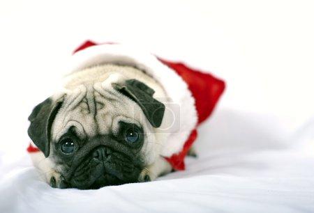 Santa Claus Puppy