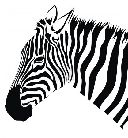 Illustration for Abstract vector illustration of zebra - Royalty Free Image