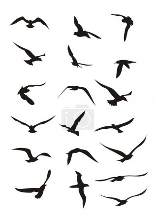 Illustration for Bird; birds; wing; wings; animal; feathery; fly; flying; silhouettes; vector; illustration; outline; flight - Royalty Free Image