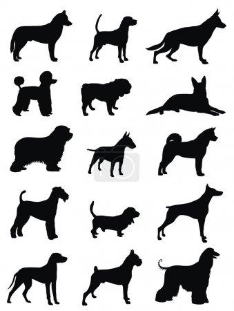 Illustration pour Illustration vectorielle de différentes silhouettes de races de chiens - image libre de droit