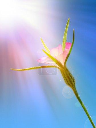 Wild flower under sun rays