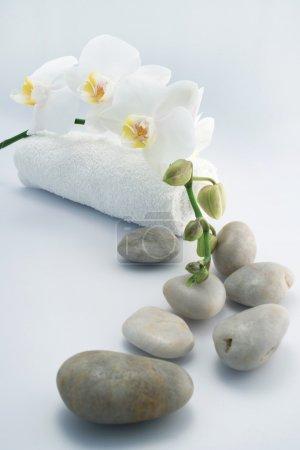 Photo pour Serviettes blanches et orchidée sur renseignements blanc - image libre de droit