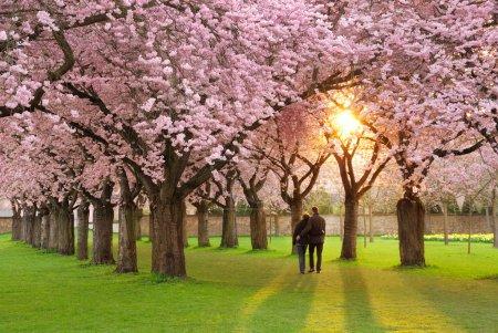 Magnificent springtime scenery