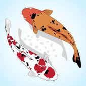Carp Koi Fish Vector greeting card