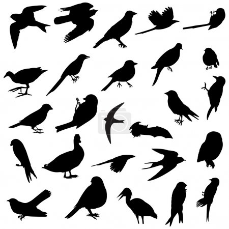 Photo for 26 silhouettes of several birds races - Royalty Free Image