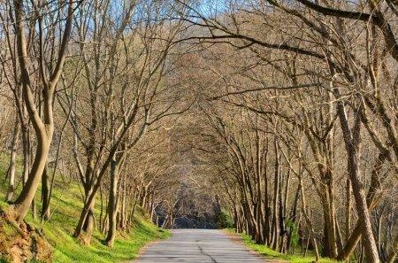 Photo pour Route de campagne avec arbres nus en hiver . - image libre de droit
