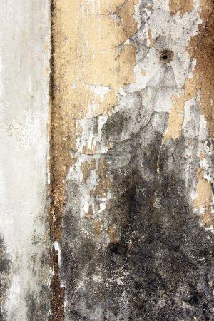 Photo pour Croissance des moisissures et peeling peinture sur le mur d'une maison abandonnée . - image libre de droit
