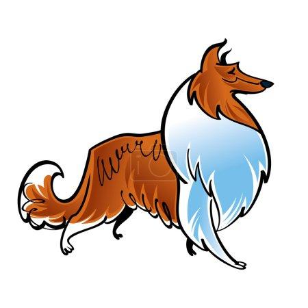 Collie scotch shepherd dog