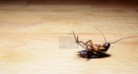 Photo for A dead, dusty roach lying on a table - Royalty Free Image