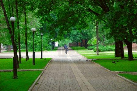 Photo pour Une personne marche dans le parc. Autour de beaucoup de plantes - image libre de droit