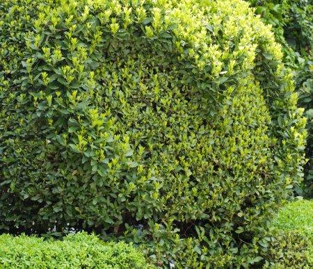 Spheric bush