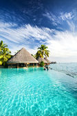 Infinity pool with palms and tropical ocean