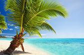Small palm tree hanging over stunning lagoon