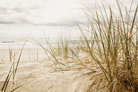 Close up of a tall grass on a beach during cloudy season
