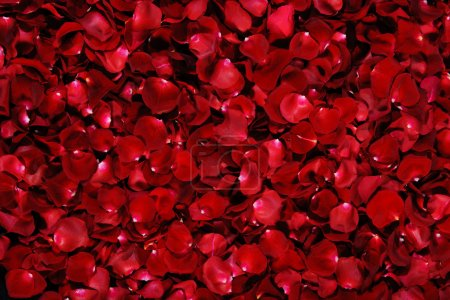 Photo for Background of red rose petals - Royalty Free Image
