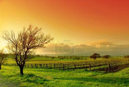 Foto de Amanecer fresca Viña - Imagen libre de derechos