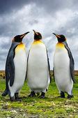 Tři krále tučňáci