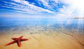 Starfish Paradise