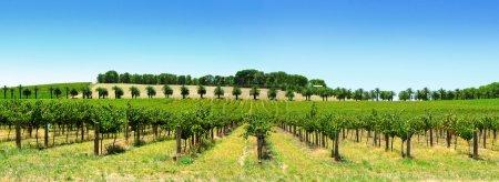 Panorama du vignoble