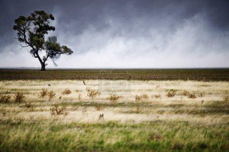 Foto de Centrarse en el árbol que está a punto de ser envuelto por un incendio - Imagen libre de derechos