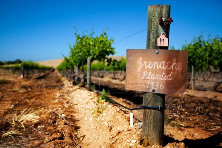 Row of vines in the Barossa Valley - focus on sign post