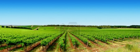 Photo for Colourful Vineyard in One Tree Hill, South Australia - Royalty Free Image