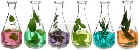 Photo for Different herbs in glass bottles with coloured liquid - Royalty Free Image