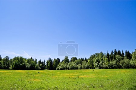 Summer field of grass and wood in the distance