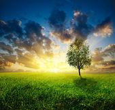 Grass and sunset