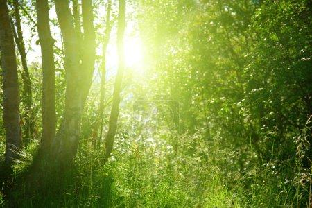 Foto de Puesta de sol en bosque profundo - Imagen libre de derechos