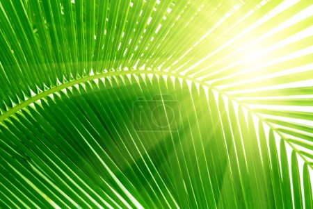 Photo for Leaves of palm and morning light - Royalty Free Image