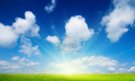 Photo for Field of summer flowers and blue sky - Royalty Free Image