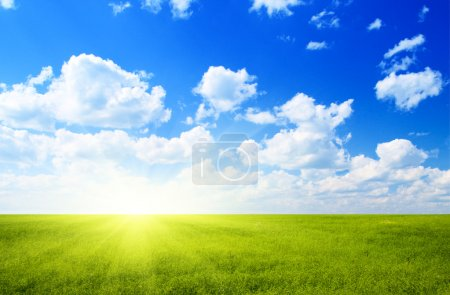 Photo for Field of flax and blue sky - Royalty Free Image