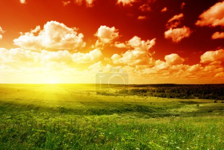 Photo for Summer landscape field of green grass and sunset - Royalty Free Image