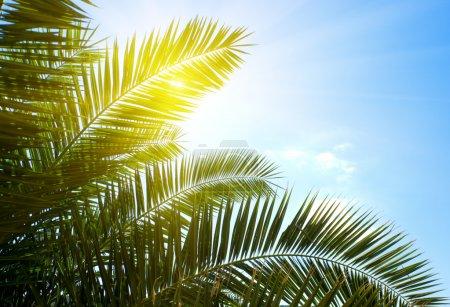 Photo pour Palme et soleil du matin - image libre de droit