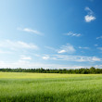 Oat field and sunny sky...