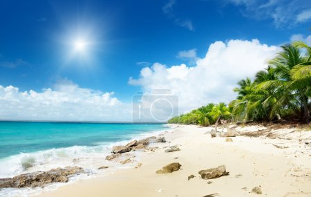 Photo for Beach of Catalina island, Dominican republic - Royalty Free Image