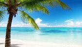 """Постер, картина, фотообои """"пальма и море"""""""