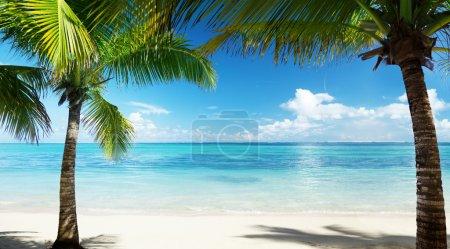 Photo pour Palmiers et plage - image libre de droit