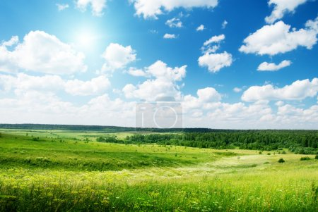 Photo for Summer sunny day and field of flowers - Royalty Free Image