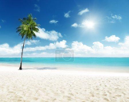 Photo pour Palmier et plage - image libre de droit