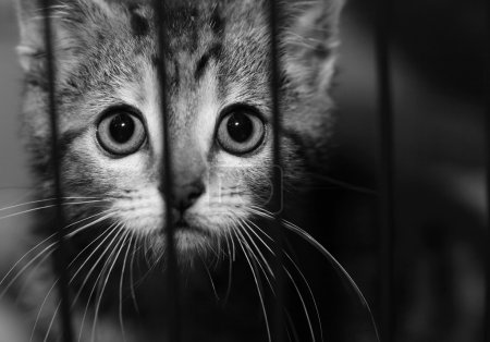 kitten in a cage looking out